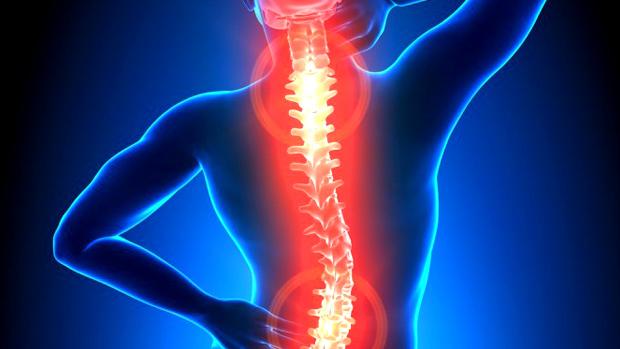 Spine[1]