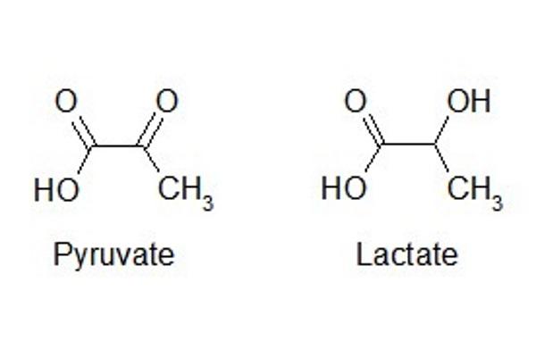 lactate_pyruvate