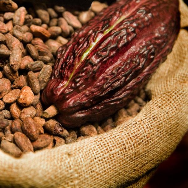 cocoa804