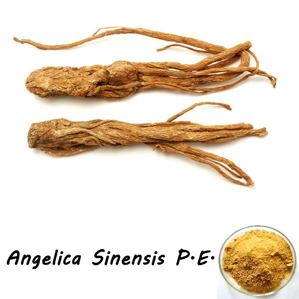 angelica_sinensis_extract_01