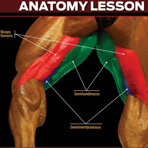 hamstrings-anatomy-lesson