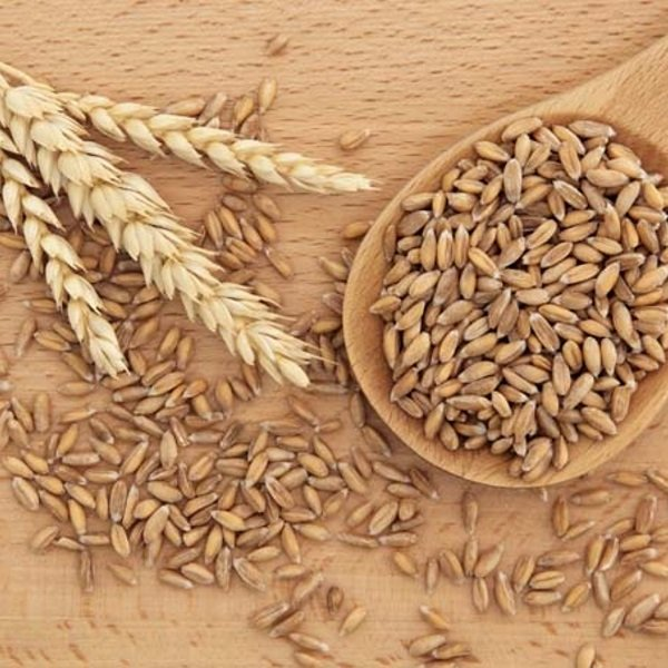 Spelt-natural-remedies-from-the-field