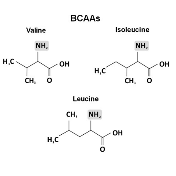 Chemical-structures-of-branched-chain-amino-acids-BCAAs-and-creatine