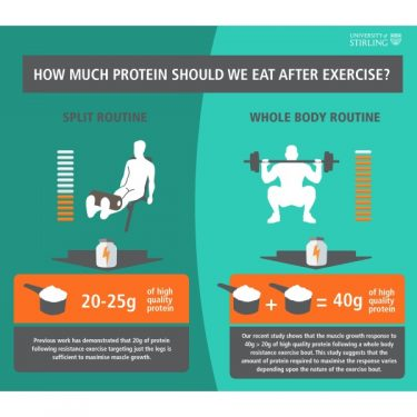 how_much_protein_should_we_eat_after_exercise